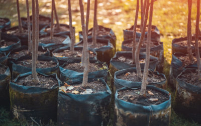 Trees are One of Nature's Brilliant Carbon Sequestration Solutions
