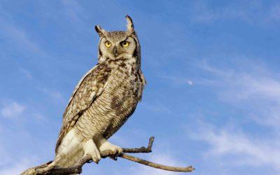 I'm Bird Brained. Golf Course Certification from Audubon International